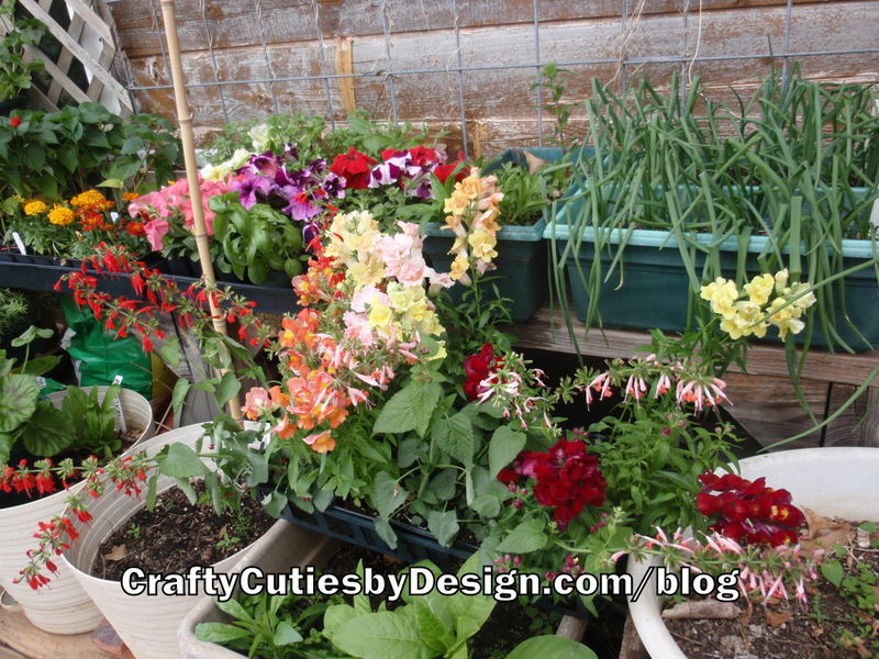 Annuals in Flats