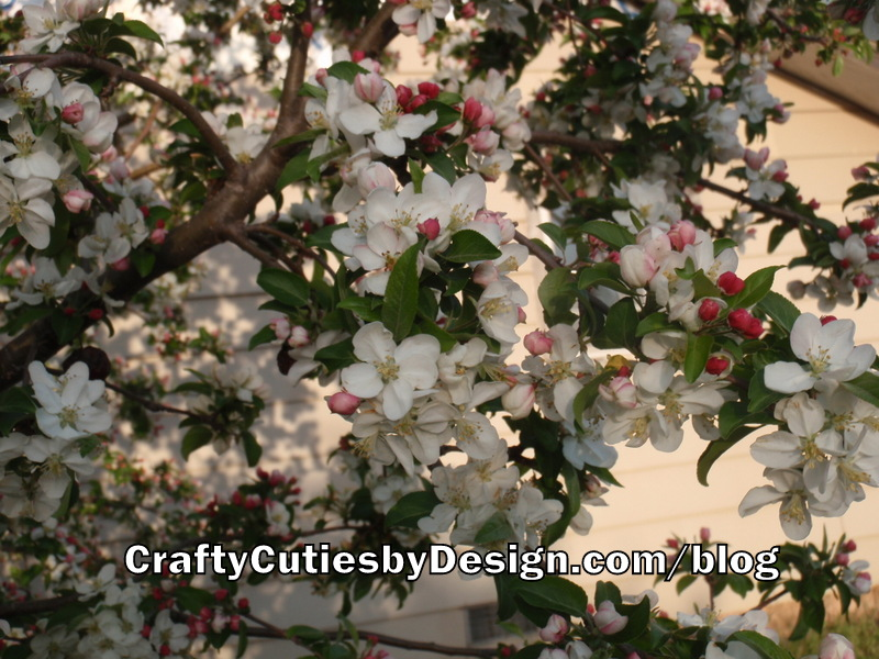 Oklahoma Flowering Crabapple Tree