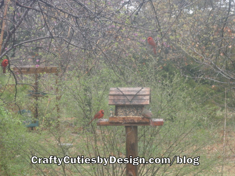 Cardinals on birdfeeder