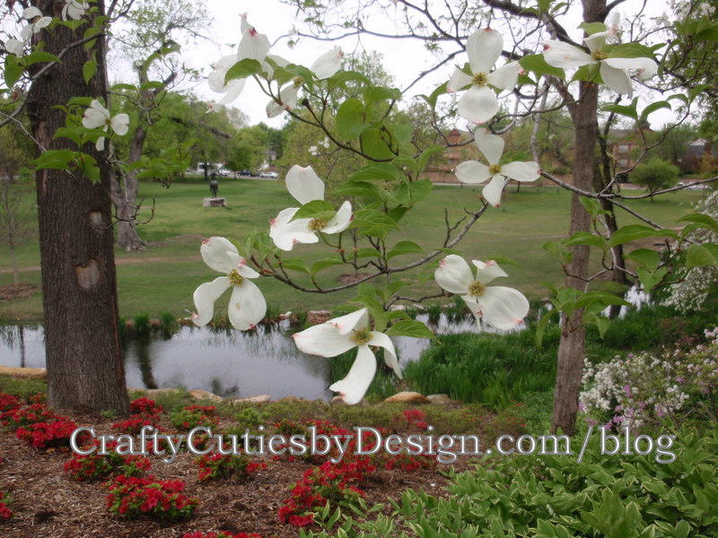 DogWood Trees nestled below  taller oaks