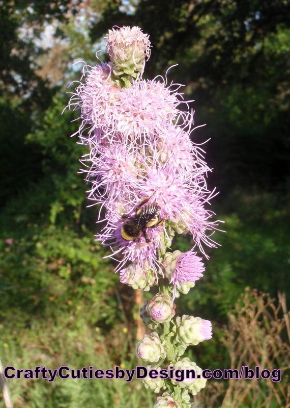 Liatris and Bee